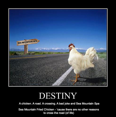 Destiny -  A chicken. A road. A crossing. A bad joke and Sea Mountain
