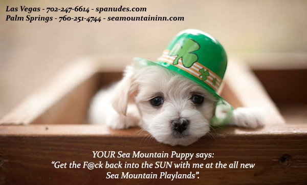 80 Sunny Degrees PLUS Annual St Pats RAGE and Sea Mountain All NEW Grounds